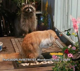 Bird on the porch with a raccoon