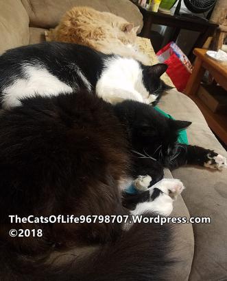 Bird Lulu and Yuki on the couch