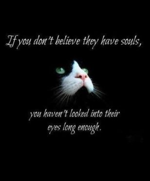 cat eyes soul