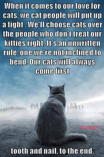 fight for cat