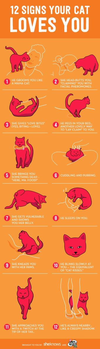 how cat loves you